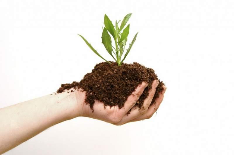 fare concime organico fai da te