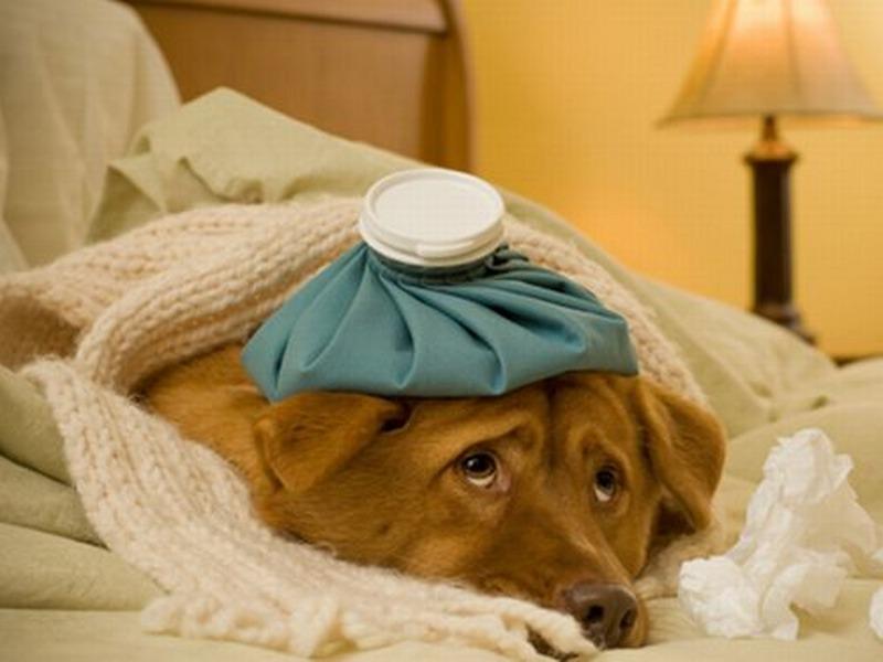 Comprendere se il tuo cane sta male: ecco come farlo al meglio