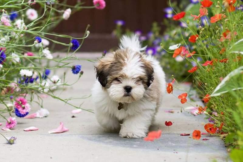 Cagnolini di piccolissima taglia:. ecco i più famosi