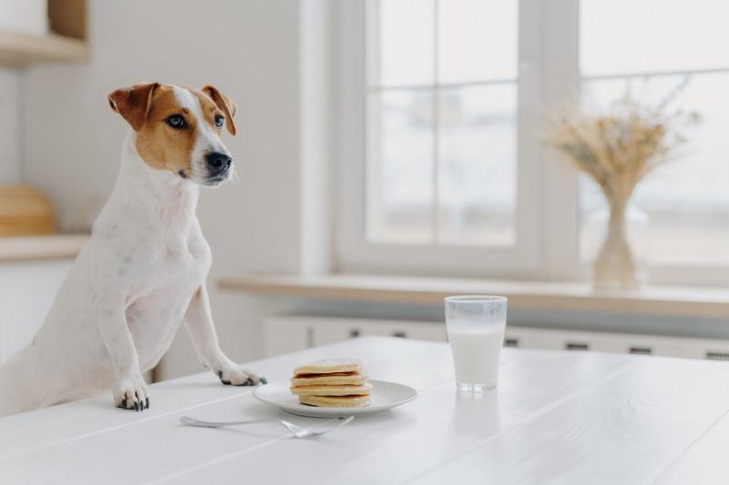 I pro e i contro degli alimenti dei cani