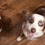Alimentazione del cane gli errori comuni