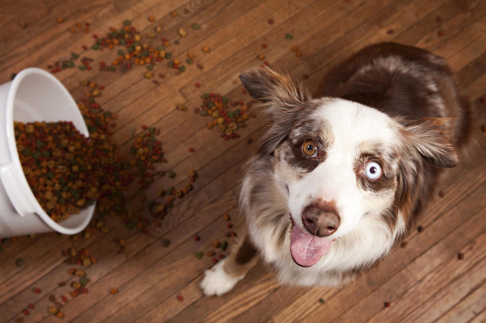 L'alimentazione del cane: gli errori comuni da evitare