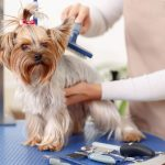 Suggerimenti base per toelettatura del cane