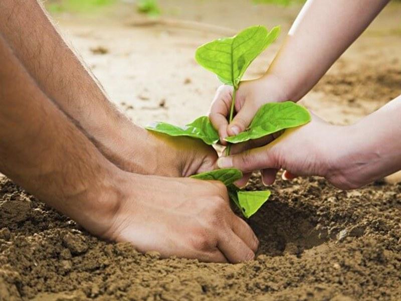 Concime organo minerale: di cosa si tratta e perché sono un ottimo supporto per le piante