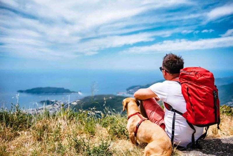 Viaggiare con animali, regole da seguire