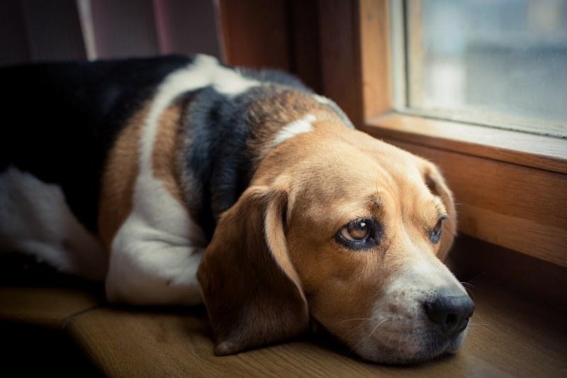 Sverminare il cane: cosa fare e non fare